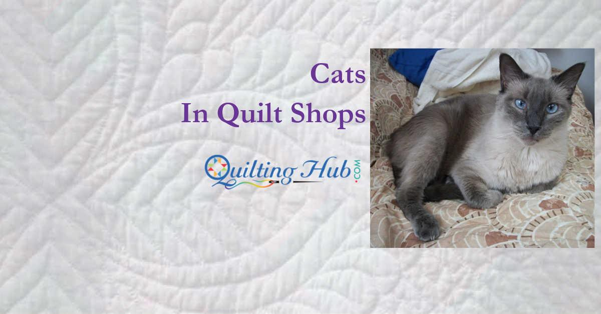 Cats In Quilt Shops